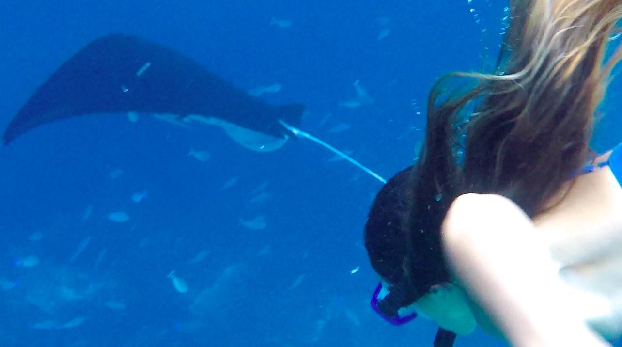 Voyage Nusa Lembongan ile paradisiaque Bali Raie Manta Snorkling 3